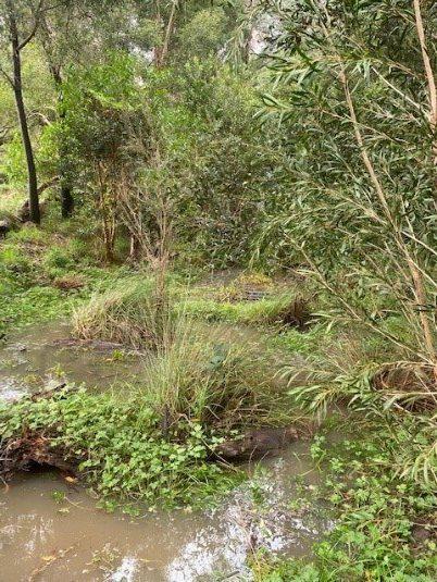 River Planting